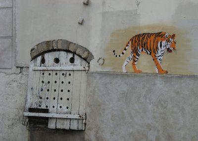 Un tigre dans la ville Paris 13 eme