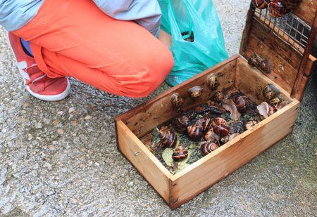 Notre récolte d'escargots de Bourgogne
