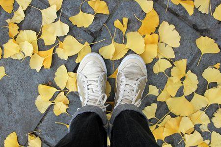 Tennis gold veja feuilles d'automne jaune