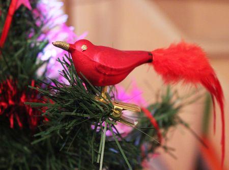 Oiseau de Noël