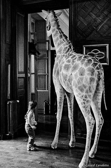 070010_paris_une_girafe_chez_deyrolles_1