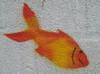 P1010006_poisson_rouge